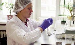 科学家在称土壤样品的实验室 免版税库存图片