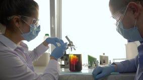 科学家增加试剂到在一块大玻璃的化工解答在一个实验实验室 股票视频