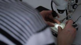 科学家学习死的昆虫遗骸在显微镜下 股票视频