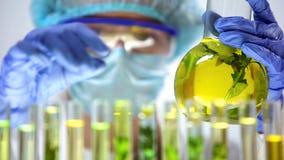 科学家手有绿色植物的,农业实验,香料厂藏品烧瓶 库存图片