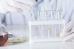 科学家有有植物的试管在小瓶的一个立场 库存图片