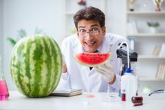 科学家测试西瓜在实验室 免版税图库摄影