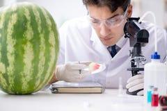 科学家测试西瓜在实验室 库存图片