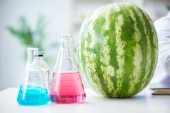 科学家测试西瓜在实验室 免版税库存图片