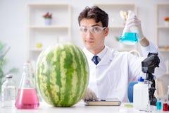 科学家测试西瓜在实验室 图库摄影