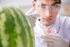 科学家测试西瓜在实验室 库存照片