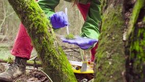 科学家生态学家在采取植物的样品森林里 库存照片