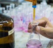 科学家积土化学制品到锥形烧瓶里 库存照片