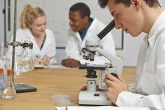 科学类的少年学生使用显微镜 免版税库存图片