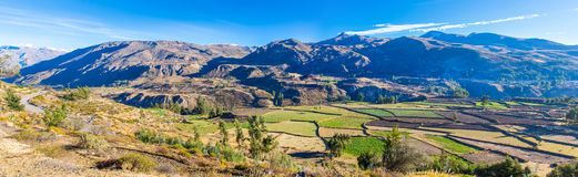 科尔卡峡谷,秘鲁,南美全景。建立种田的印加人与池塘和峭壁的大阳台。 库存照片