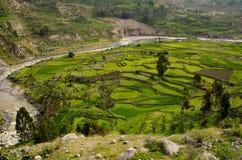 科尔卡峡谷,秘鲁 免版税库存图片