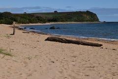 科尔斯海滩devonport塔斯马尼亚岛 库存照片