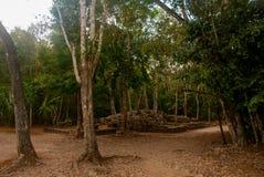 科巴,墨西哥 古老玛雅城市在墨西哥 科巴是一个考古学区域和尤卡坦半岛一个著名地标  森林arou 库存照片