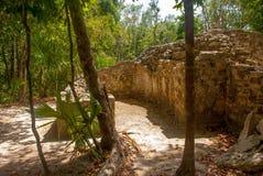 科巴,墨西哥 古老玛雅城市在墨西哥 科巴是一个考古学区域和尤卡坦半岛一个著名地标  森林arou 免版税库存照片