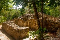 科巴,墨西哥 古老玛雅城市在墨西哥 科巴是一个考古学区域和尤卡坦半岛一个著名地标  森林arou 库存图片