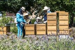 05 07 2017年科布伦茨德国-在蜂房观看的蜂的蜂农教的孩子 在蜂窝的蜂 蜂蜂房的框架 免版税库存图片