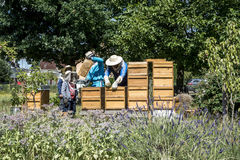 05 07 2017年科布伦茨德国-在蜂房观看的蜂的蜂农教的孩子 在蜂窝的蜂 蜂蜂房的框架 库存图片