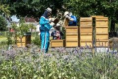 05 07 2017年科布伦茨德国-在蜂房观看的蜂的蜂农教的孩子 在蜂窝的蜂 蜂蜂房的框架 免版税库存照片