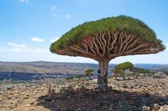 索科特拉岛,海岛,印度洋,也门,中东 库存照片