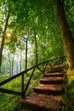 科瓦东加在阿斯图里亚斯Picos欧罗巴的森林台阶 库存图片