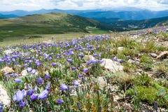 科罗拉多与春天野花的落矶山脉风景 库存图片