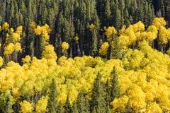科罗拉多圣胡安山在秋天 库存照片