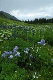 科罗拉多山岩石野花 库存照片