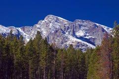 科罗拉多山松岩石结构树 免版税图库摄影