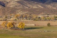 科罗拉多山麓小丘的农田 免版税库存照片
