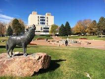 科罗拉多州立大学,镇 免版税库存照片