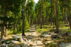 科罗拉多森林的树 图库摄影