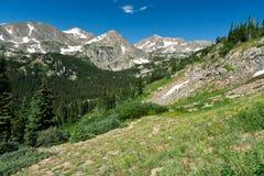 科罗拉多横向山野花 库存图片