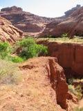 科罗拉多沙漠 库存照片