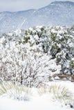 科罗拉多泉矛高峰范围冬天雪 免版税库存图片