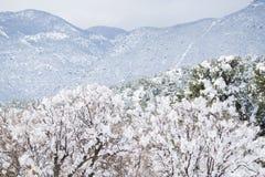 科罗拉多泉矛高峰范围冬天雪 库存图片