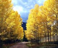 科罗拉多白杨木形成金门 图库摄影