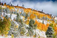 科罗拉多落矶山脉斯诺伊秋天颜色 图库摄影