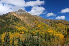 科罗拉多落矶山脉金子和黄色白杨木树秋天clors林冠层  库存照片