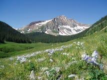 科罗拉多lupines山 库存图片