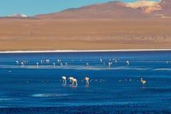 科罗拉达湖,玻利维亚的altiplano的西南的浅盐湖 库存照片