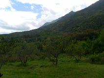 科西嘉岛绿色风景 库存图片