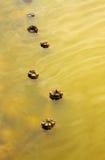 科马基奥盐水湖,意大利:被淹没的老杆 免版税图库摄影