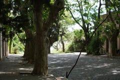科洛尼亚省树  库存图片