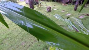 秘密地方:在雨前的一个小热带水池 免版税库存照片