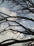 秘密树 免版税图库摄影