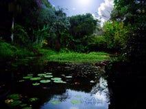 秘密池塘 免版税库存图片