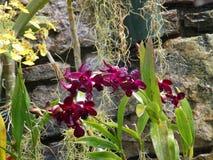 秘密热带庭院 库存图片