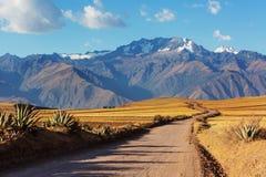 秘鲁南美大草原 免版税库存图片
