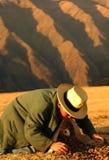 秘鲁工作者 库存照片