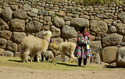 从秘鲁的当地妇女有喇嘛的 库存照片